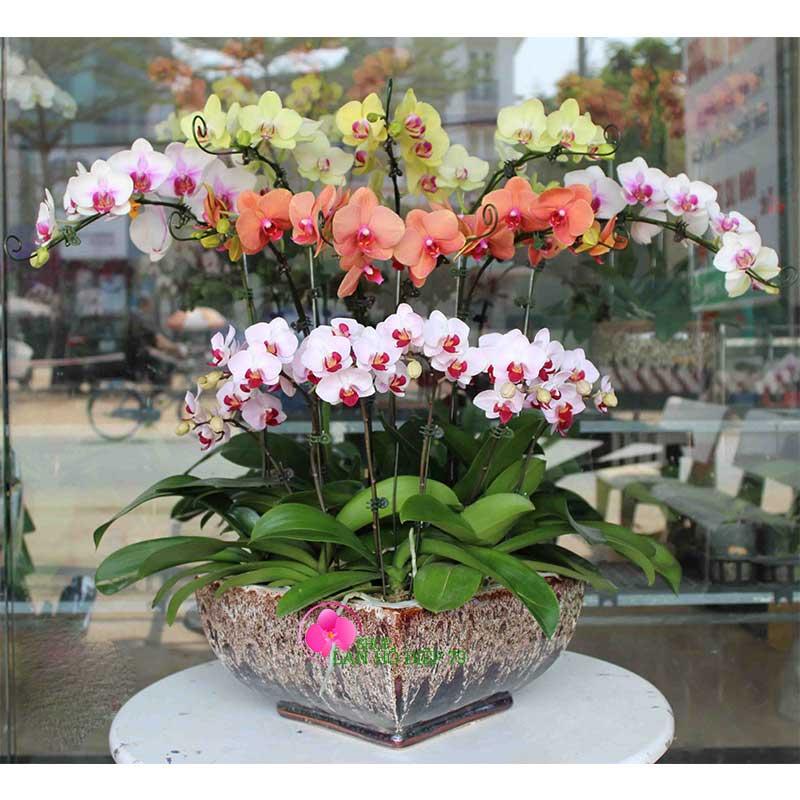 Kết quả hình ảnh cho hoa lan tết