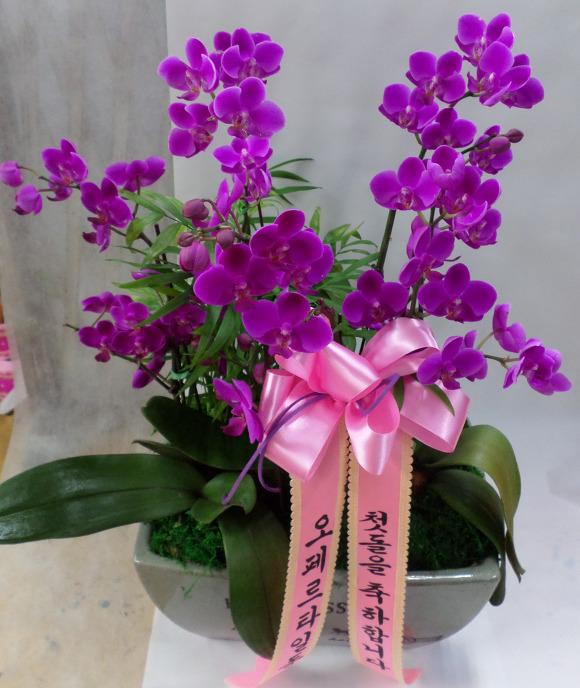 Shop hoa tươi giá rẻ nhất - 23